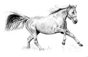 Galloping Mare