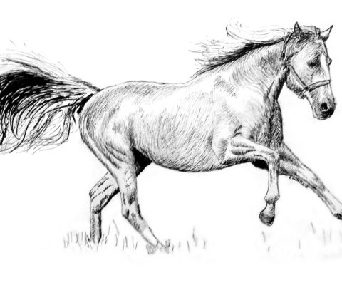 Galloping Mare