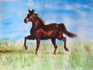 Dark Horse on the Prairie