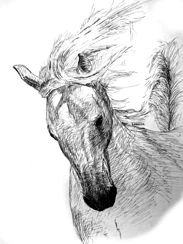 Kate's Horse